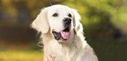 寵物用藥品委託製造