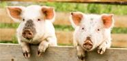 動物用藥品委託製造